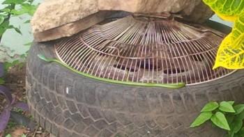 Вон та зелененькая полосочка на колесе. В колёсах улитки, может поесть пришла.... - IMG_20180808_122029.jpg