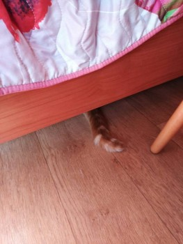 Где же кот?  - IMG-3a3188f299a053ee8203c04170f3e5a1-V.jpg