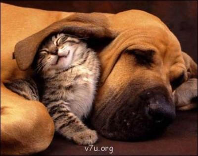 Ваше состояние души: мысли и чувства в картинке или мелодии - Cute-Kitten-Hound-Dog-1.jpg