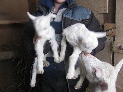 а это мои новорожденные козлятки. - 004.JPG